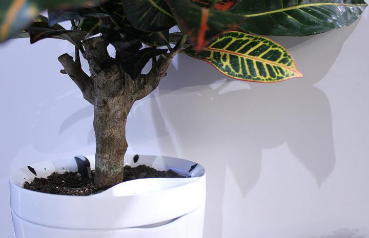 Oxygon-plant
